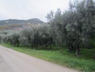 TERRENO AGRICOLO, Via Serroni